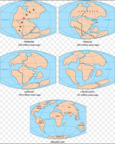 The formation of seven continents from continental drift